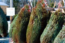 cedar_hill_christmas_tree_farm_0331
