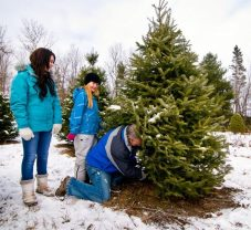 cedar_hill_christmas_tree_farm_1319