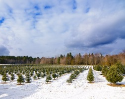 cedar_hill_christmas_tree_farm_5274