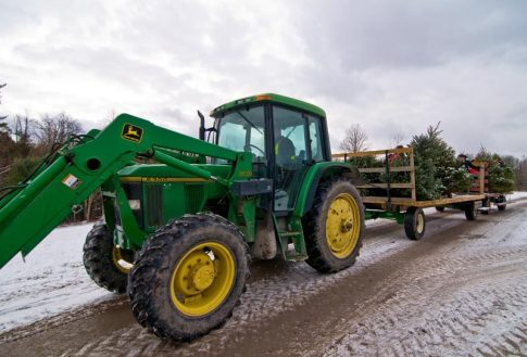 cedar_hill_christmas_tree_farm_57454