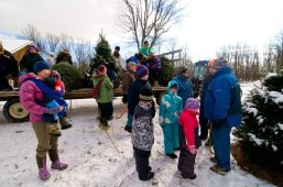 cedar_hill_christmas_tree_farm_58879