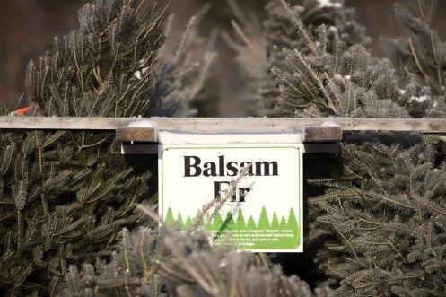ottawa-christmas-tree-cut-your-own_CH_web 099
