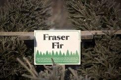 ottawa-christmas-tree-cut-your-own_CH_web 100