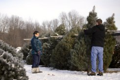 ottawa-christmas-tree-cut-your-own_CH_web 104