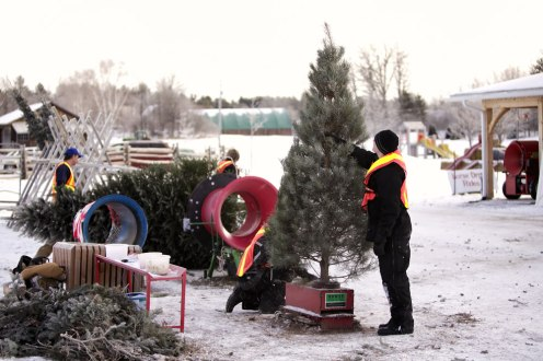 ottawa-christmas-tree-cut-your-own_CH_web 107