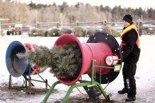 ottawa-christmas-tree-cut-your-own_CH_web 108
