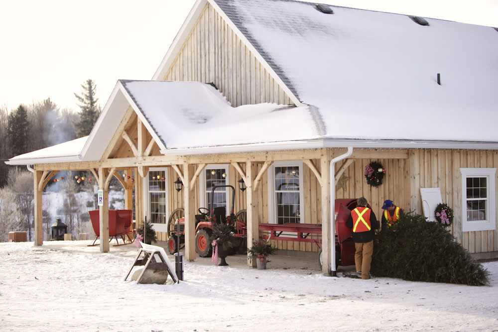 About Cedar Hill Christmas Tree Farm