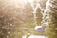 ottawa-christmas-tree-cut-your-own_CH_web 126