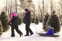 ottawa-christmas-tree-cut-your-own_CH_web 127