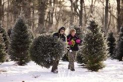 ottawa-christmas-tree-cut-your-own_CH_web 128