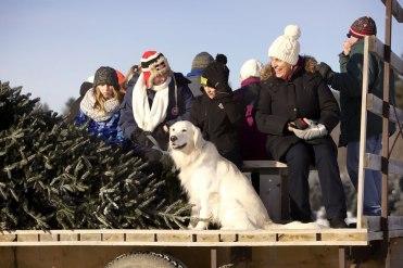 ottawa-christmas-tree-cut-your-own_CH_web 130