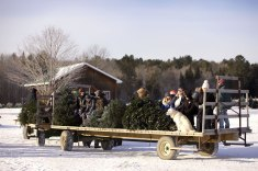 ottawa-christmas-tree-cut-your-own_CH_web 131