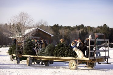 ottawa-christmas-tree-cut-your-own_CH_web 131