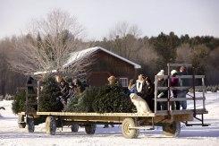ottawa-christmas-tree-cut-your-own_CH_web 132