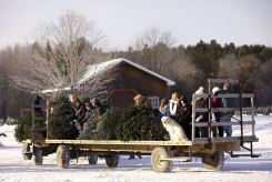 ottawa-christmas-tree-cut-your-own_CH_web 132