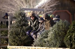 ottawa-christmas-tree-cut-your-own_CH_web 133