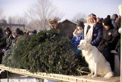 ottawa-christmas-tree-cut-your-own_CH_web 136