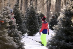 ottawa-christmas-tree-cut-your-own_CH_web 137