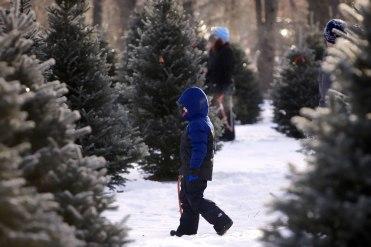 ottawa-christmas-tree-cut-your-own_CH_web 138