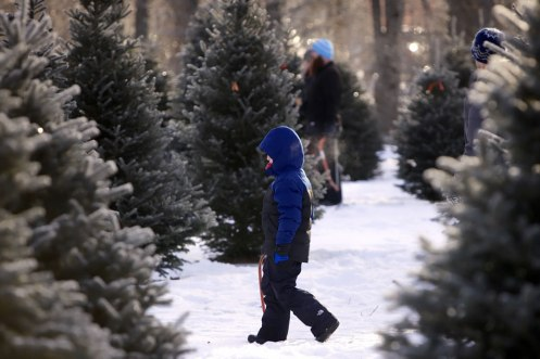 ottawa-christmas-tree-cut-your-own_CH_web 138