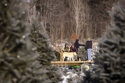 ottawa-christmas-tree-cut-your-own_CH_web 139