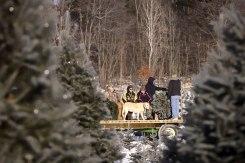 ottawa-christmas-tree-cut-your-own_CH_web 139