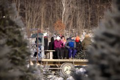 ottawa-christmas-tree-cut-your-own_CH_web 140
