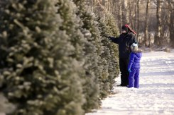 ottawa-christmas-tree-cut-your-own_CH_web 142