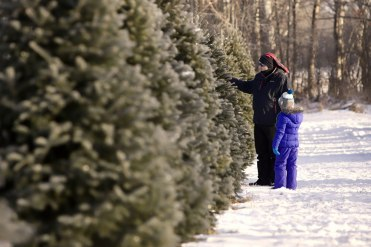 ottawa-christmas-tree-cut-your-own_CH_web 142