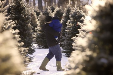 ottawa-christmas-tree-cut-your-own_CH_web 143