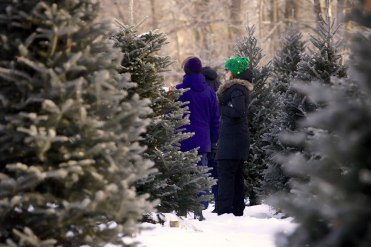 ottawa-christmas-tree-cut-your-own_CH_web 148