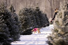 ottawa-christmas-tree-cut-your-own_CH_web 149