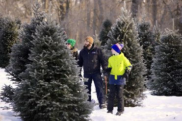 ottawa-christmas-tree-cut-your-own_CH_web 151