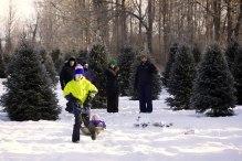 ottawa-christmas-tree-cut-your-own_CH_web 152