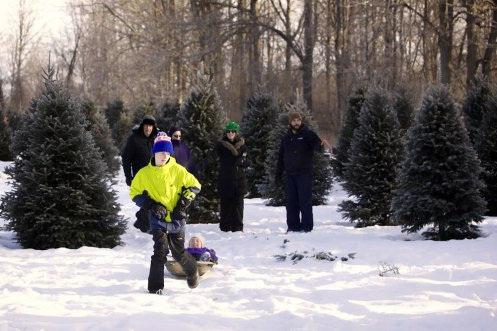 ottawa-christmas-tree-cut-your-own_CH_web 152