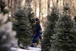 ottawa-christmas-tree-cut-your-own_CH_web 154