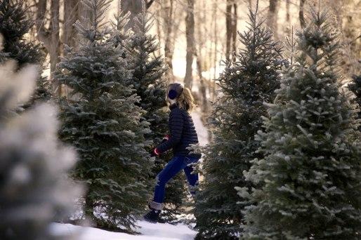 ottawa-christmas-tree-cut-your-own_CH_web 154