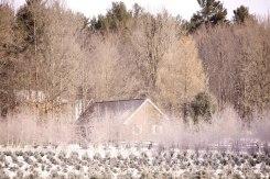 ottawa-christmas-tree-cut-your-own_CH_web 159