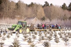 ottawa-christmas-tree-cut-your-own_CH_web 161