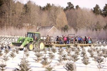 ottawa-christmas-tree-cut-your-own_CH_web 161