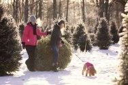 ottawa-christmas-tree-cut-your-own_CH_web 169
