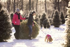 ottawa-christmas-tree-cut-your-own_CH_web 169