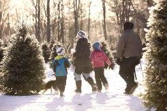 ottawa-christmas-tree-cut-your-own_CH_web 170