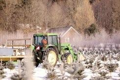 ottawa-christmas-tree-cut-your-own_CH_web 173