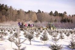 ottawa-christmas-tree-cut-your-own_CH_web 174