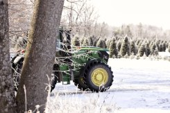 ottawa-christmas-tree-cut-your-own_CH_web 183
