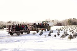 ottawa-christmas-tree-cut-your-own_CH_web 184