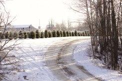 ottawa-christmas-tree-cut-your-own_CH_web 189