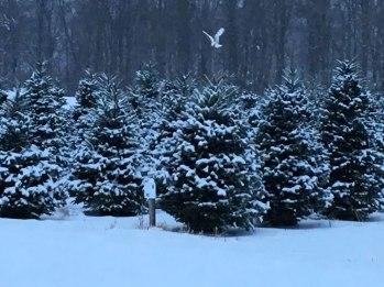 Christmas tree pricing