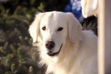 Dog policy at Cedar Hill